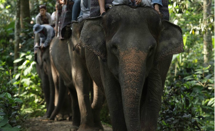 エレファントサファリライド(象に乗れます) 画像